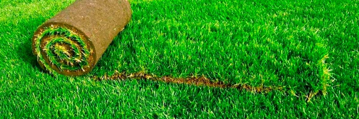 Выбор газона, посевной или рулонный?